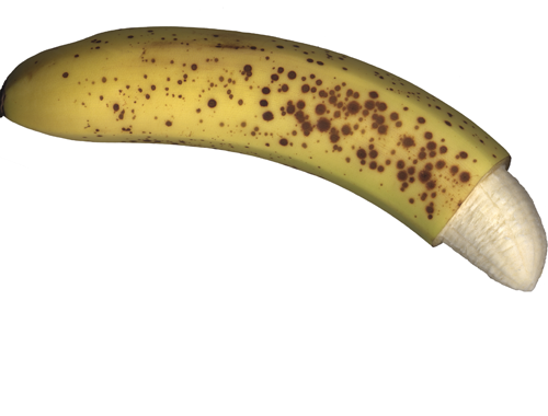 penisuri crestate)