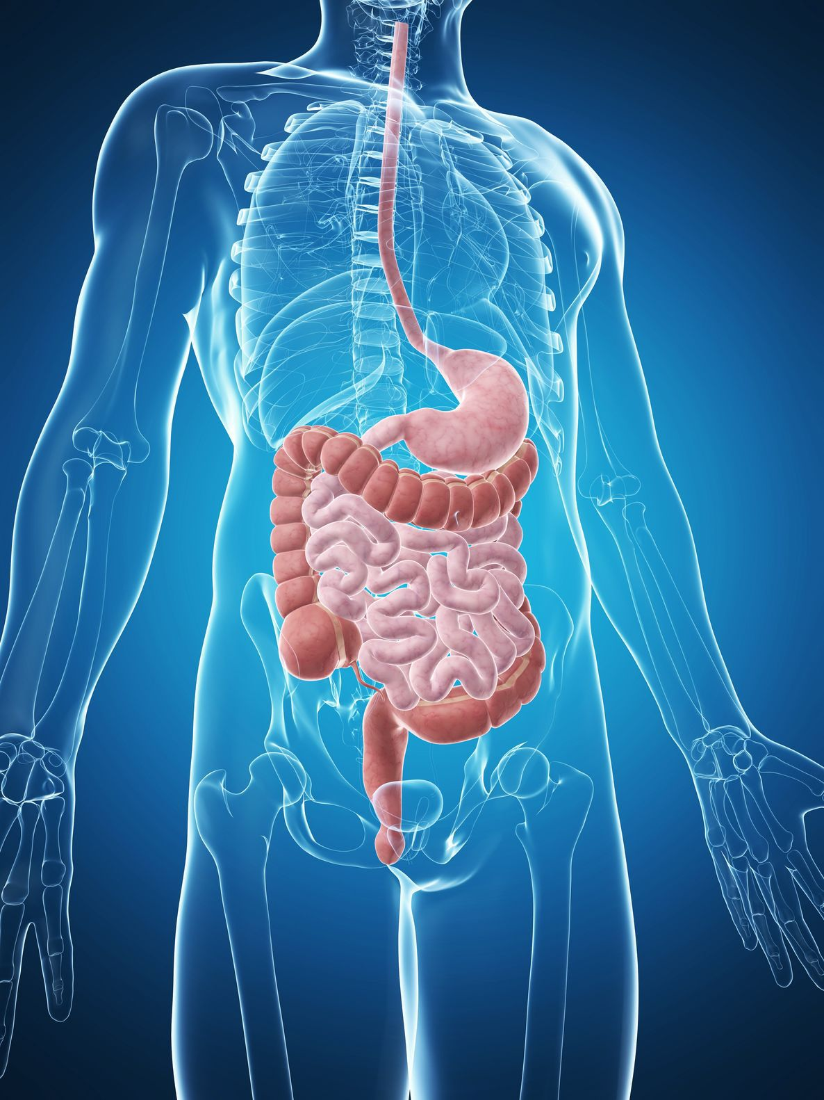 afectiunile sistemului digestiv referat