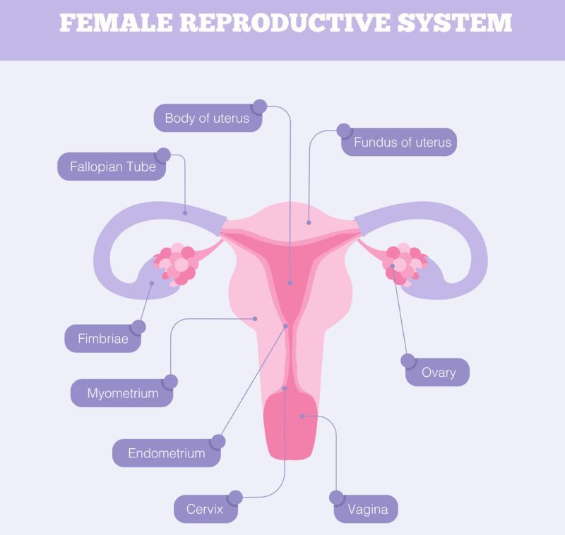 condiloame pe colposcopia colului uterin)