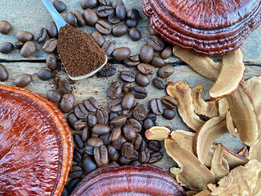 cafeaua ganoderma ajută la pierderea în greutate)