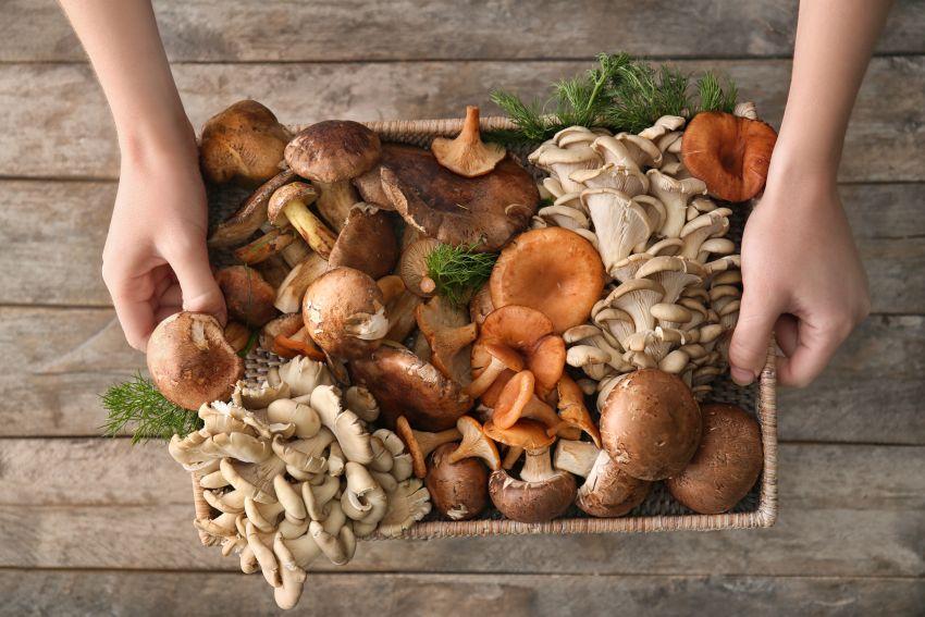 ciuperci beneficii